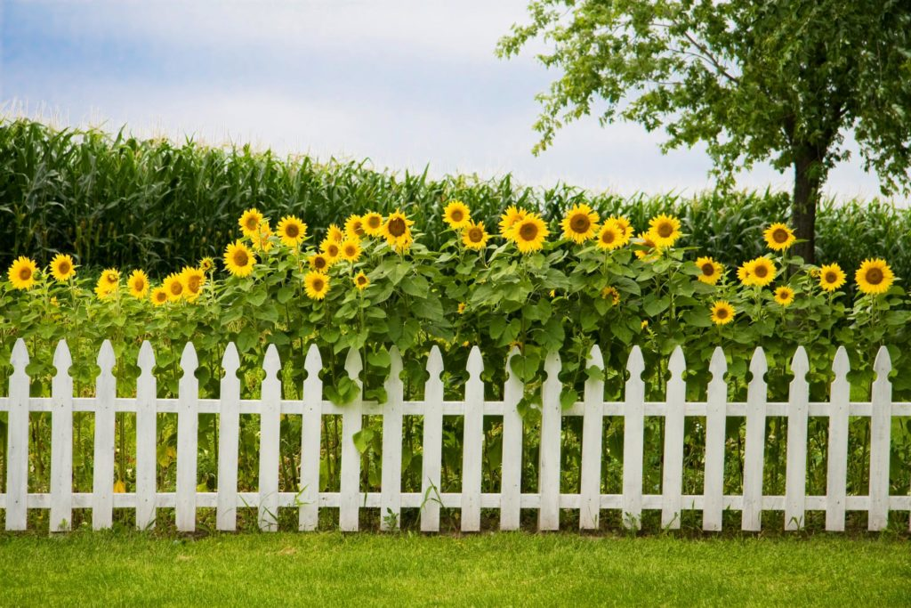 Love for Landscaping - Fencing 1