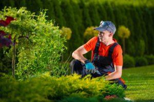 landscaping in Chandler AZ
